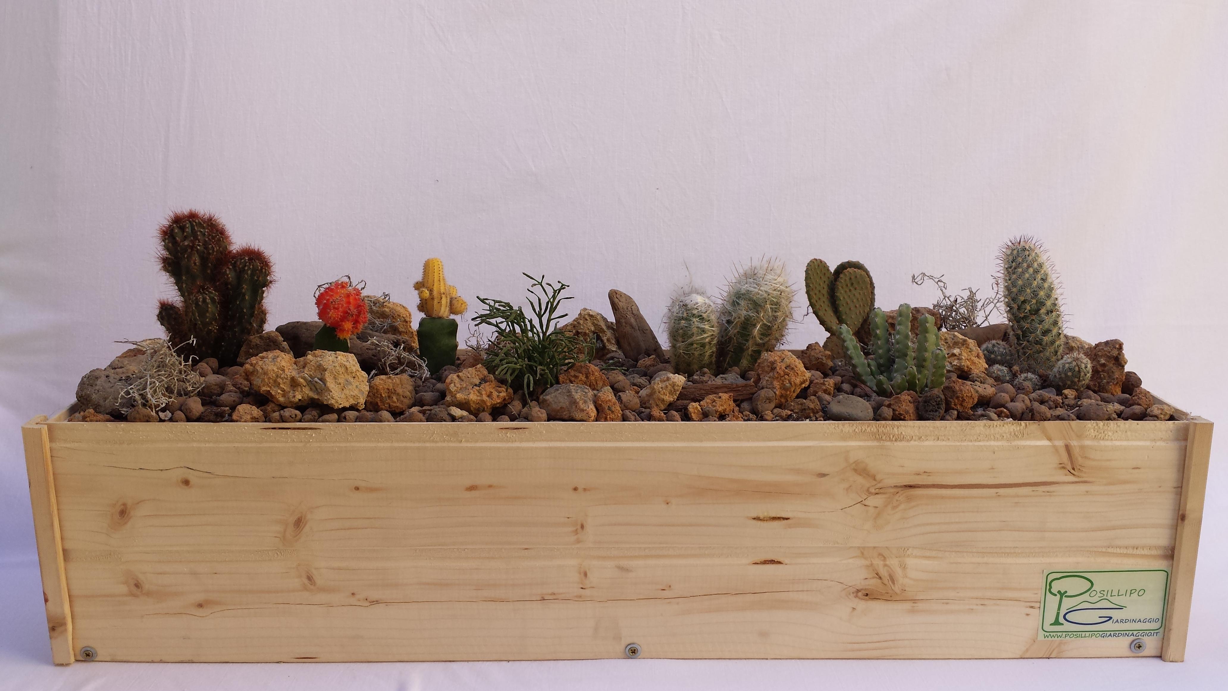 Posillipo giardinaggio servizi - Vasi con piante grasse ...